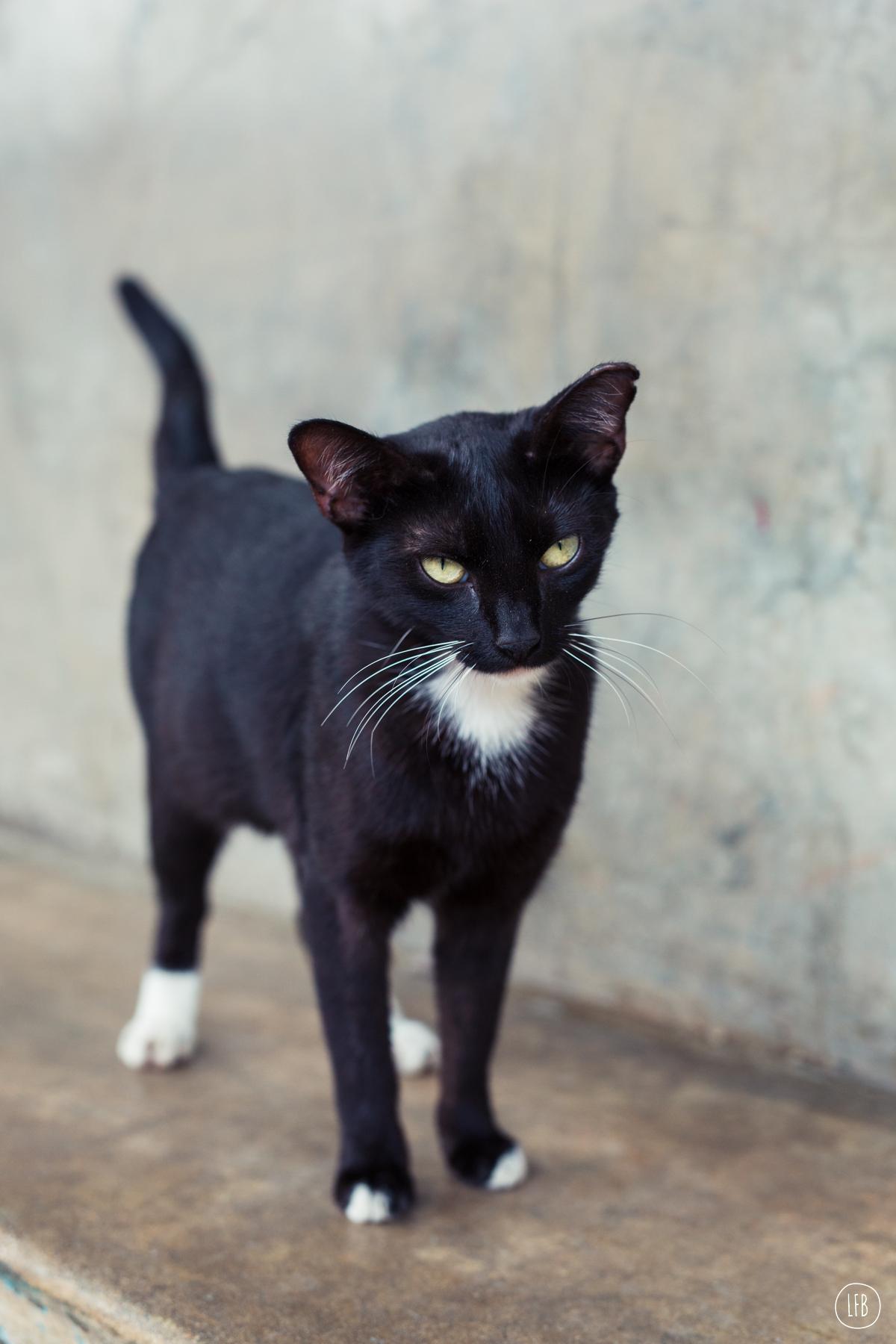 cat in puerto rico